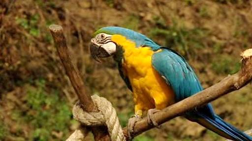 Papoušek na bidýlku