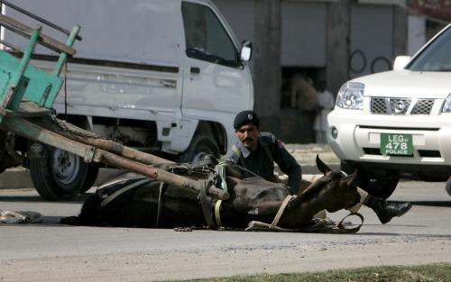Pákistánský policista se kryje za raněným koněm