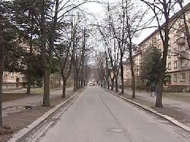 Lipová alej v Jilemnického ulici