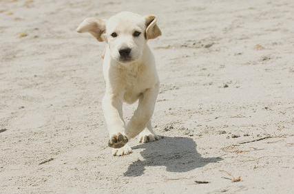 Nejhorší pes na světě