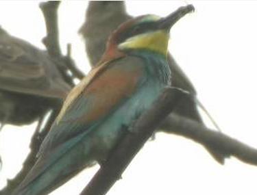 Teplomilný druh ptáků