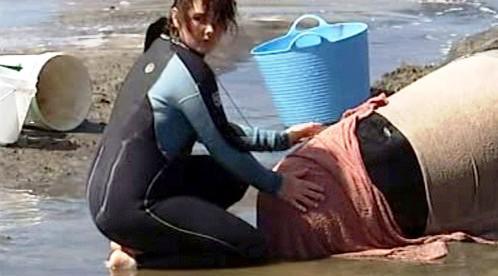 Záchrana delfínů a kulohlavců