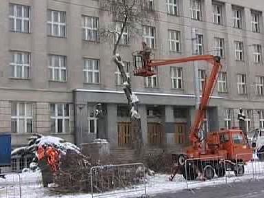 Kácení stromů v centru Hradce Králové