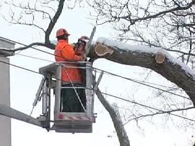 Ořezávání přestárlých stromů