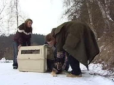 Odchyt opuštěného psa