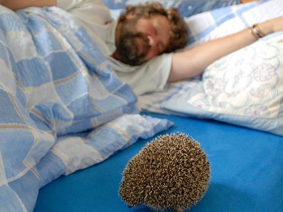 S ježkem v posteli...