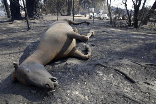 Při požárech v Austrálii umírala i zvířata