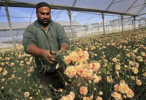 Karafiáty z pásma Gazy