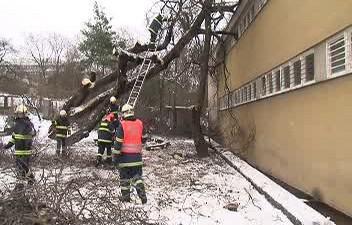 Spadlé stromy v Brně