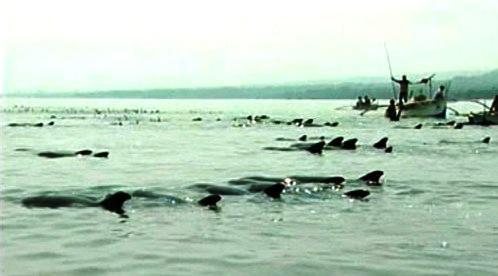Zmatení delfíni