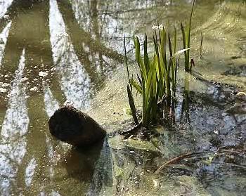 Znečištěný rybník