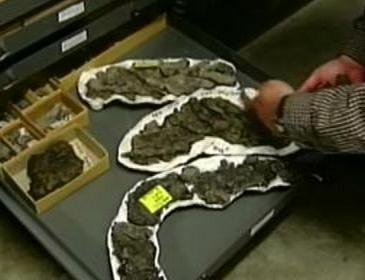 Zkameněliny obřího hada