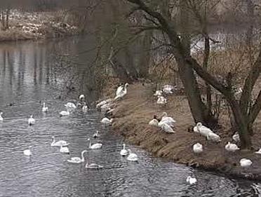 Zimoviště ptactva
