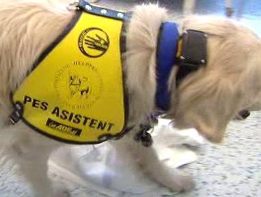 Asistenční pes