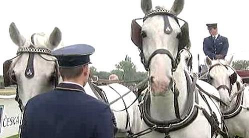 Spřežení s bílými koňmi