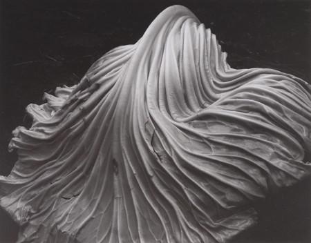 Cabbage Leaf (1931)