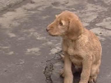 Zubožené štěně