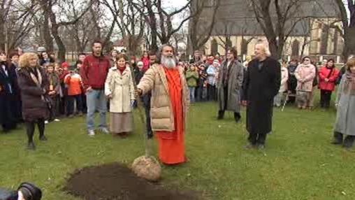 Sázení stromu míru