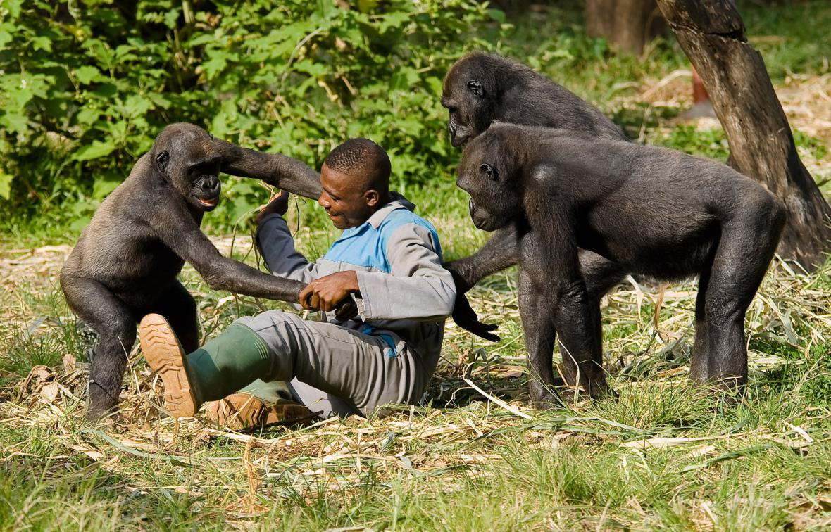 Limbe Wildlife Centre