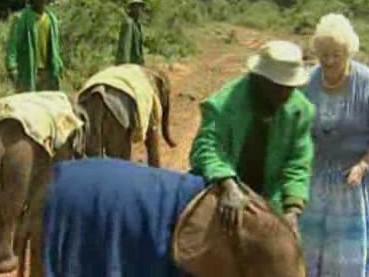 Malí sloni v africké vesnici