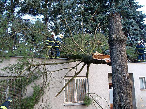 Hasiči odstraňovali spadlý strom