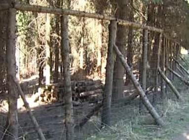 Plot v lese