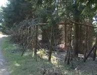 Oplocení lesa