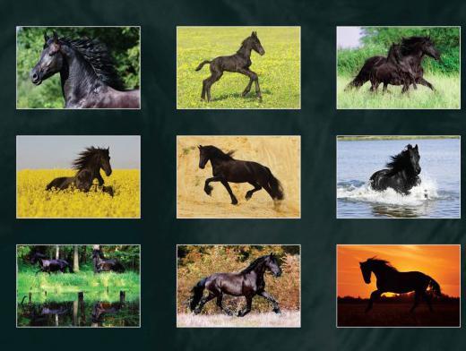 Black Horse Show