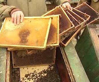 Zničený úl