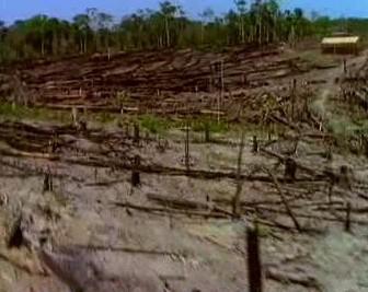 Kácení pralesa