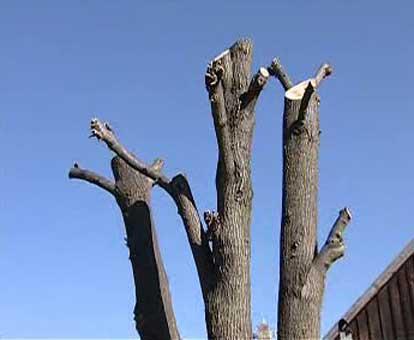 Pahýl stromu