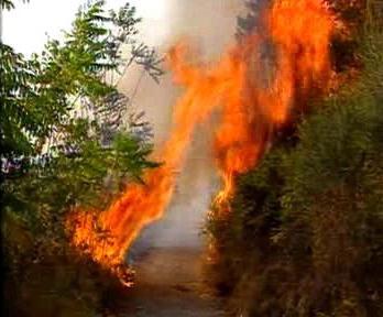 Požár na chorvatském pobřeží