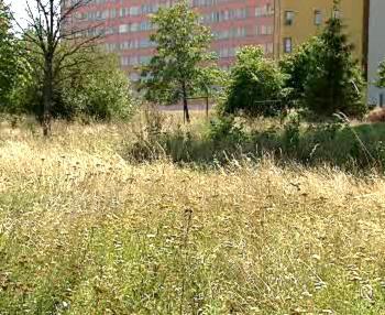 Přerostlá tráva na Zahradním Městě