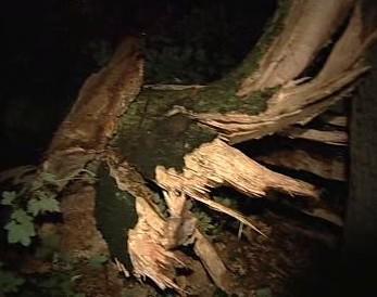 Vyvrácený strom po bouřce