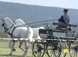 Koňské spřežení