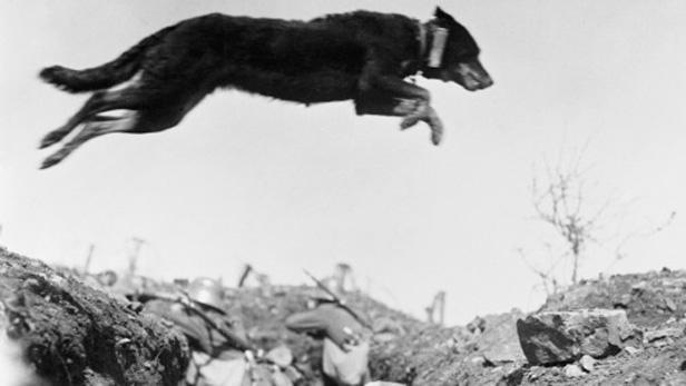 Pes v 1. světové válce