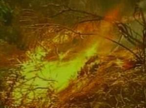 Hořící les v Kalifornii