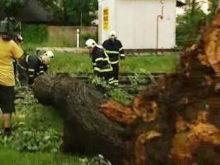 Likvidace popadaných stromů
