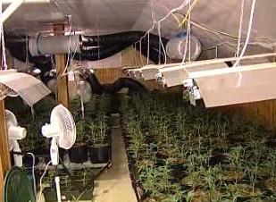 Pěstírna marihuany objevená v domě na Kladensku.