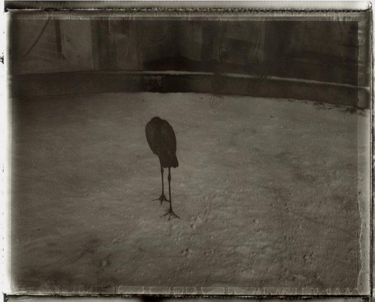 Sarah Moonová: Le marabout