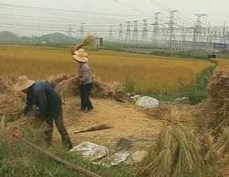 Asijští zemědělci