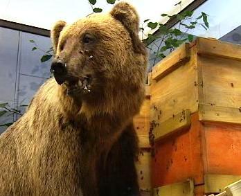 Vycpaný medvěd Bruno