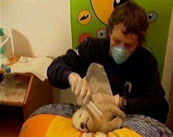 Knut a jeho ošetřovatel