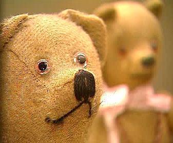 Medvídci a medvědi