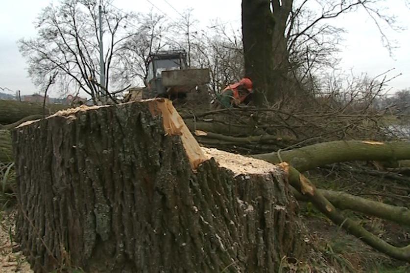 Ve Zlíně kácejí stromy ze 30. let