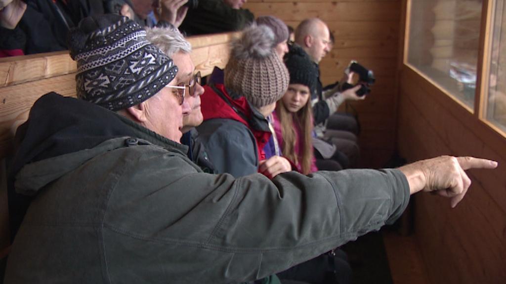 Pozorování jelenů na Šumavě