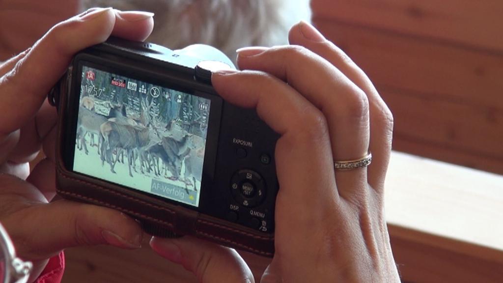 Unikátní fotografie jelenů v obůrce