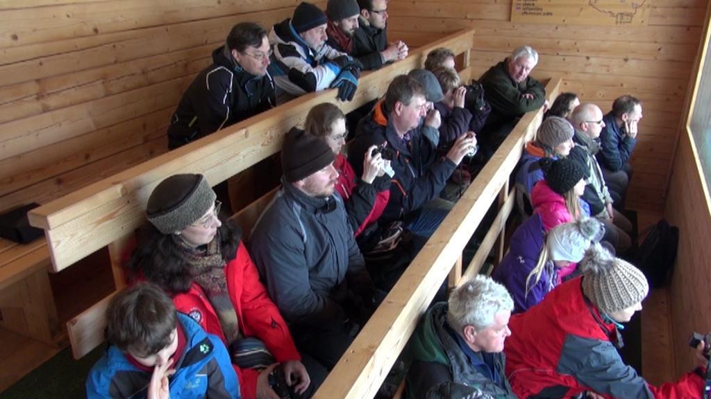 Lidé pozorují jeleny