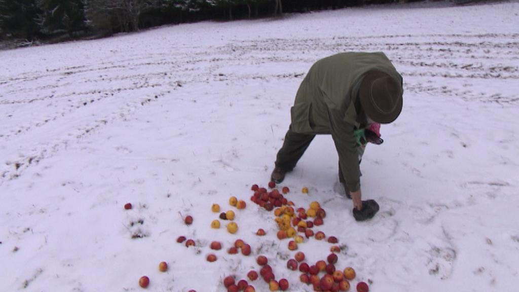 Návštěvníci jelenům přinášejí jablka