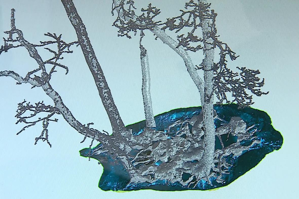 Stáří stromů zjistili vědci pomocí laserového skenování